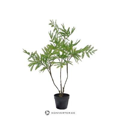 Ornamental plant in a pot (leya)