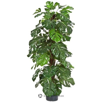 Artificial plant philo (euroflor)